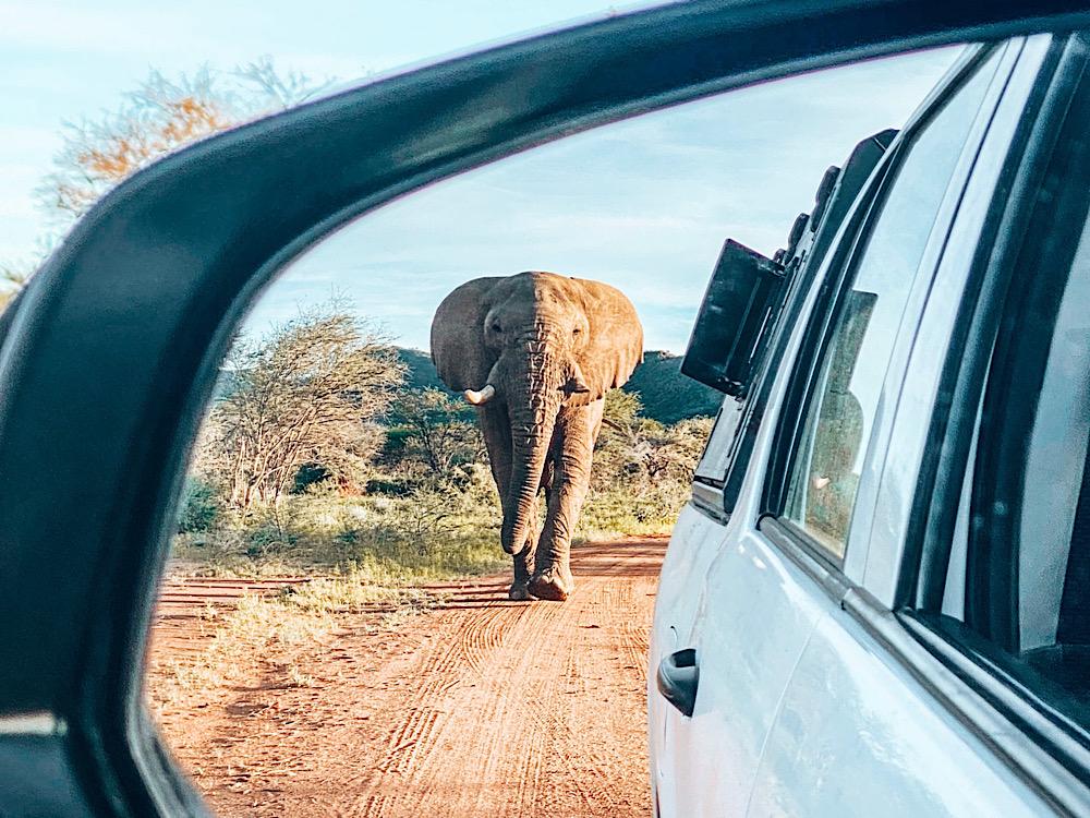гейм драйв Намибия