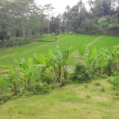 Land for sale in Tabanan !