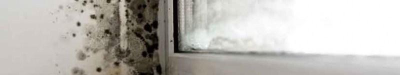Moisissure et domotique: comment atténuer les proproblème à travers Home Assistant