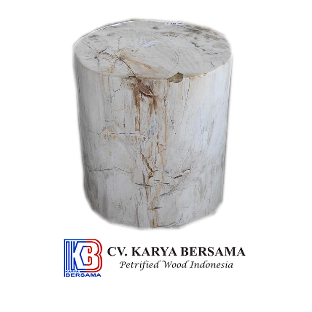 Petrified Wood Full Polish