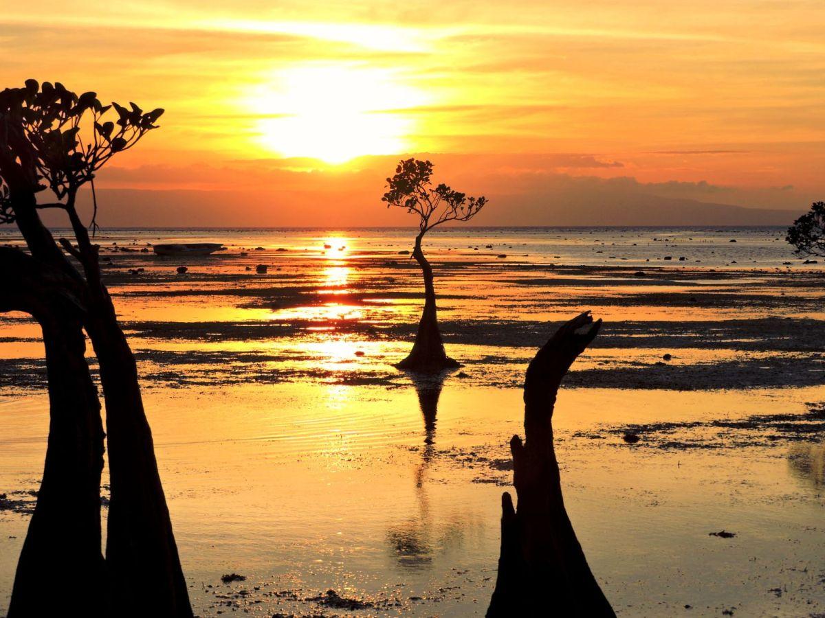 Sumba mangrovia nana a walakiri