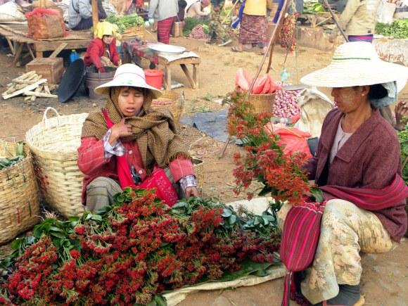Myanmar kalaw fiori