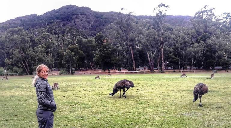 halls gap emu e canguri ai giardini