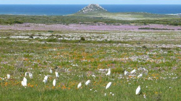 Sudafrica Iin primavera Fioriture