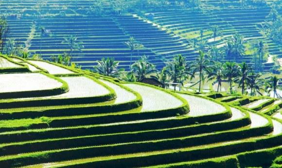 Bali paradiso le verdi terre di Jatiluwih