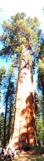 Sequoia NP - Generale Sherman