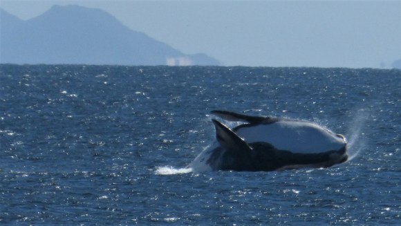 Sudafrica Balena-De Kelders