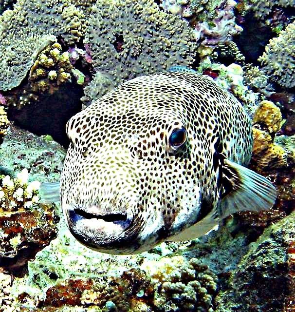 viaggiare eco-friendly pesce palla
