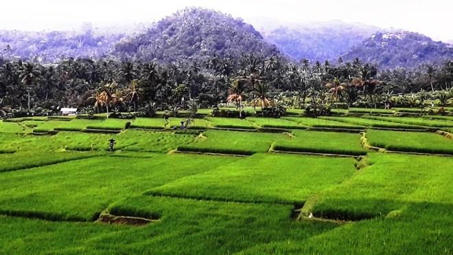Bali risaie nei dintorni di Tabanan