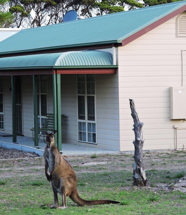 kangaroo island in giardino