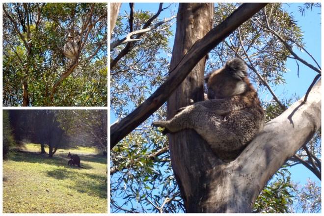 Australia Wild e Outback