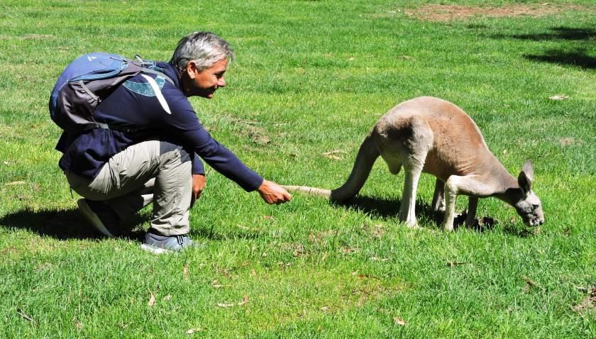 Adelaide hill canguro