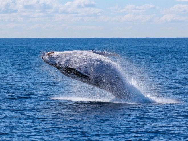 Molokai e Lanai Whale Watching