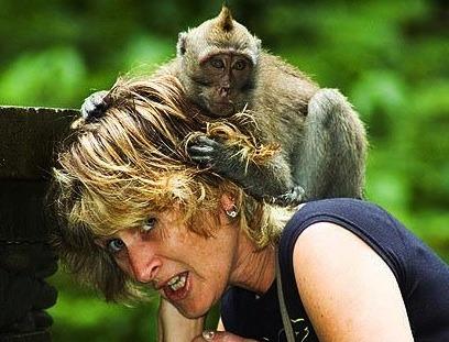 island of gods ,bali-monkey-attack-cropped