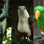 gili meno bird sanctuary