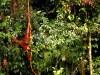 Bukit Lawang Orangutan Rehabilitation Centre, Indonesia Travel Guide