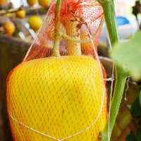 Fruit Park - Taman Buah Mekarsari - Bogor