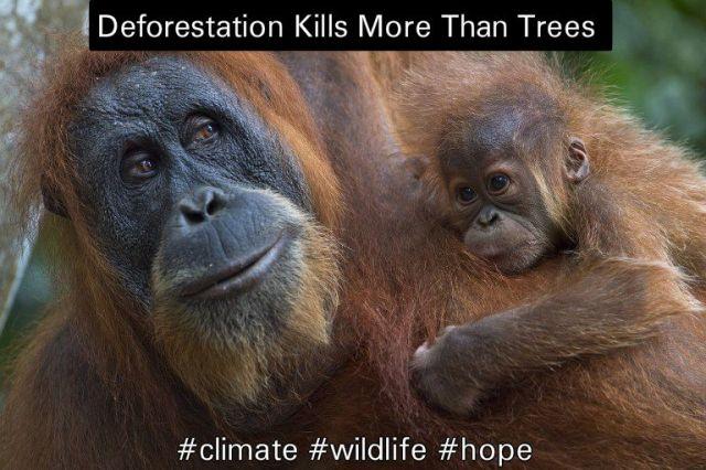 Orangutan conservation and ecotourism