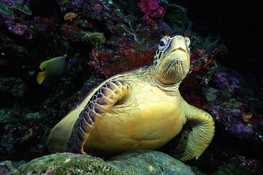 scuba dive Sulawesi