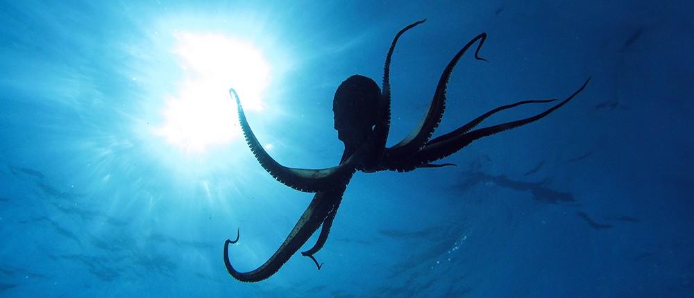 Indonesia A World-Class Diving Destination