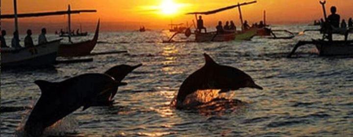 Dolfijnen Spotten – Lovina Beach
