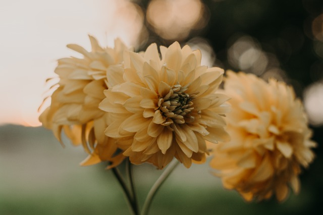 small_Canva - Close-up Photo Of Yellow Petaled Flowers (1)