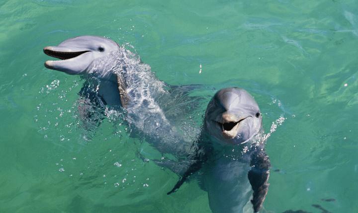 smile_dolphin