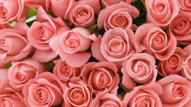 ば_薔薇3