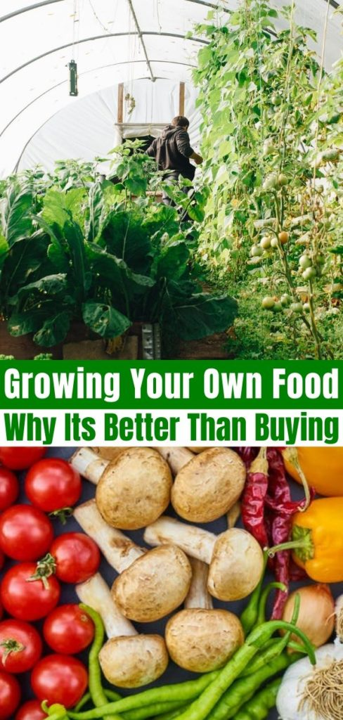Growing Your Own Food Why It S Better Indoor Gardening Solutions