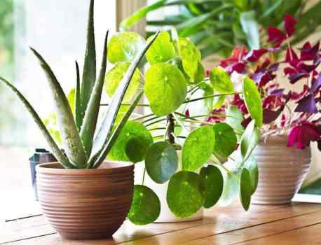 17 Fast Growing Indoor Plants – Garden in a Month