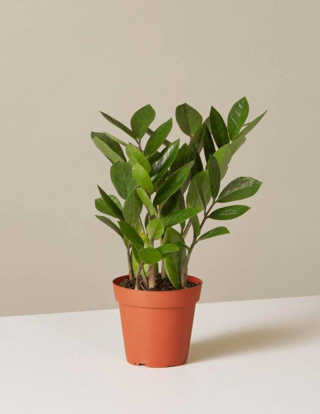 My Favorite Low Maintenance House Plants - Indoor Plant Care