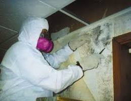 artesia-mold-remediation-mold-removal