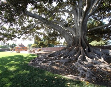 glendora-big-tree-park