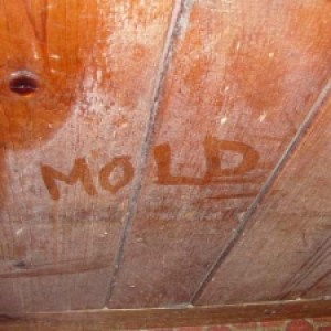 south-pasadena-mold