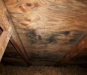 Mold-in-the-attic