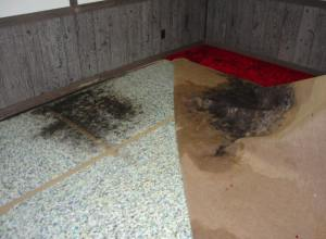 Water-Damage-Mold-Removal-Fontana
