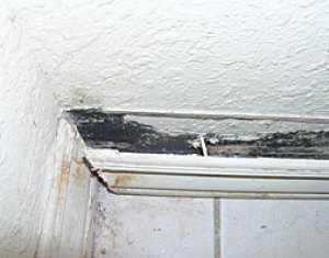contaminated ceiling with mold in a malibu property