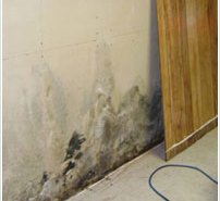 mold behind wall panel