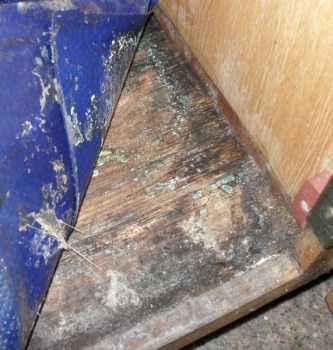 mold-inspection-under-flooring