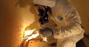 mold removal in south pasadena