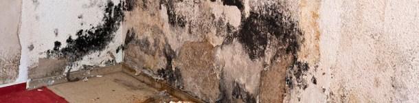 water-damage-mold-growth-glendora