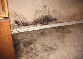 mold-growth-in-visalia-home