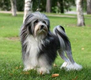 Anjing Paling Mahal di Dunia