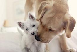 Fakta Menarik Tentang Anjing