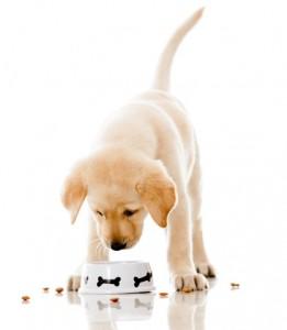 Makanan yang Tidak Boleh Dimakan oleh Anjing