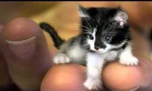 Jenis Hewan Terkecil Di Dunia
