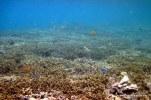 corals @ Maratua island