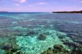 coral @ liukang beach