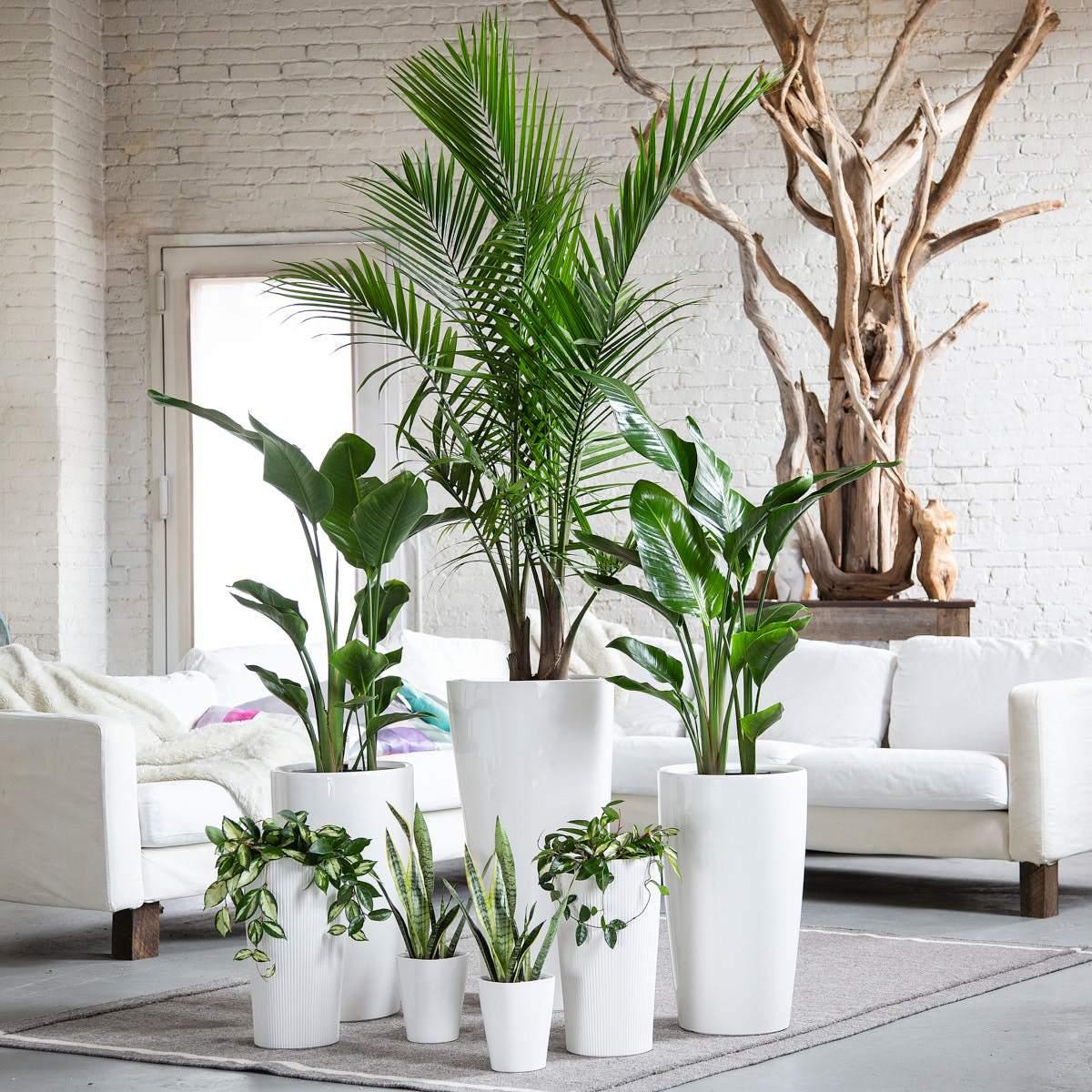 Piante Adatte Al Sole Diretto piante da interni · in2