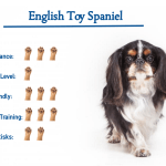 English Toy Spaniel Dog Breed Everything That You Need To Know At A Glance